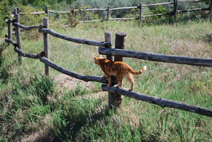 Friendly neighbourhood cat